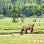〔më〕大沼流山牧場〜Paard Musee〜に行ってきました