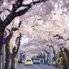 〔më〕桜撮影 @桜が丘通